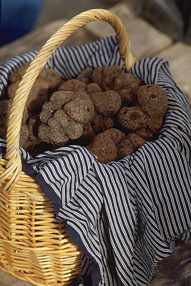 In der ganzen Welt beliebt, französische Trüffel sind eine weltweit geschätzte Spezialität. Aber auch eine der teuersten und kulinarisch wertvollsten Pilze