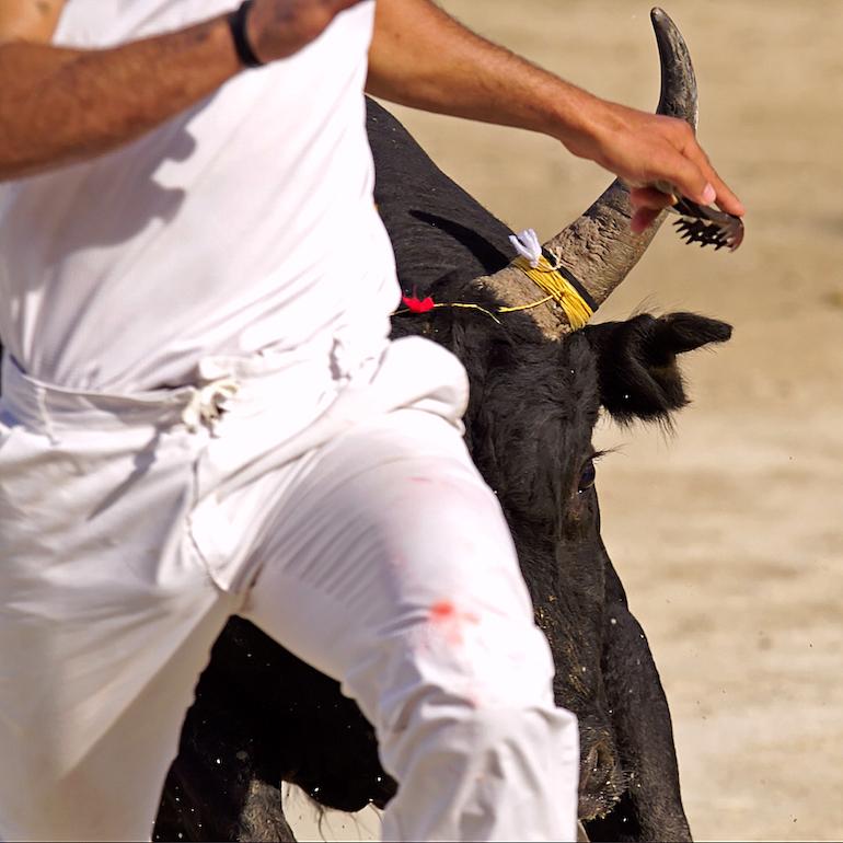 Im warmen Südfrankreich ist das Stier Rennen noch eine Tradition und erfreut sich redlicher Beliebtheit.
