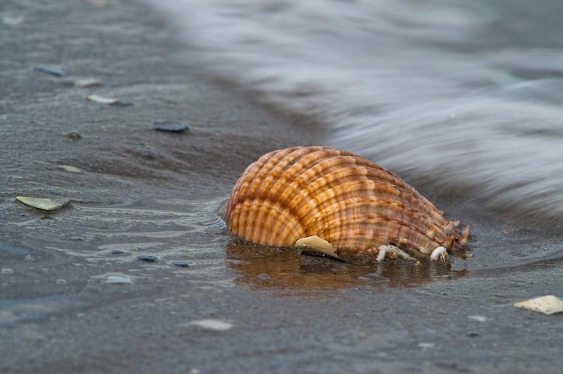 Ein schönes Bild von einer Muschel, Strand und dem Meer, aufgenommen an einem Strand in Frankreich.