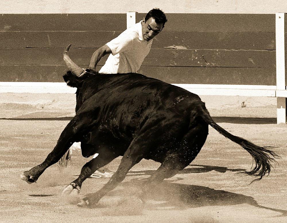 Stierkampf in Frankreich. Die Akteure versuchen einen Ring über die Hörner der Stiere zu stecken.
