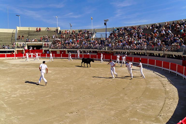 Ein gut besuchter Stierkampf in Südfrankreich. Viele Cowboys in der Arena halten den Stier in schach