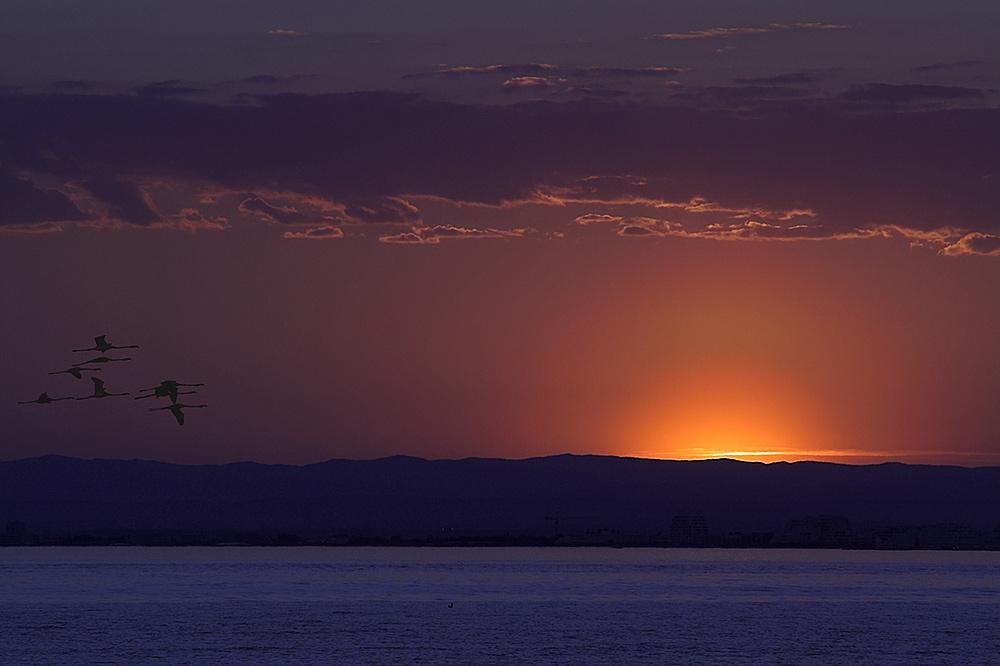 Tief-roter Sonnenuntergang in der Camargue. Ein paar Flamingos ziehen noch am Abendhimmel Ihre Runden.