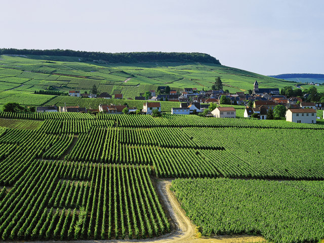 Oger Côte des Blancs - Champagner Touristenroute. Entdecken Sie diese wunderbaren Landschaften mit den Champagner Touristenrouten.