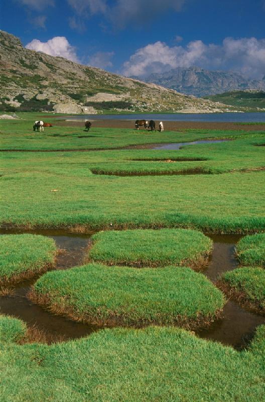 Plateau du Coscione auf der Straße des Lac Nino. Die Coscione ist die größte Hochebene Korsikas und besteht aus vielen mittelhohen Bergen und Hügeln
