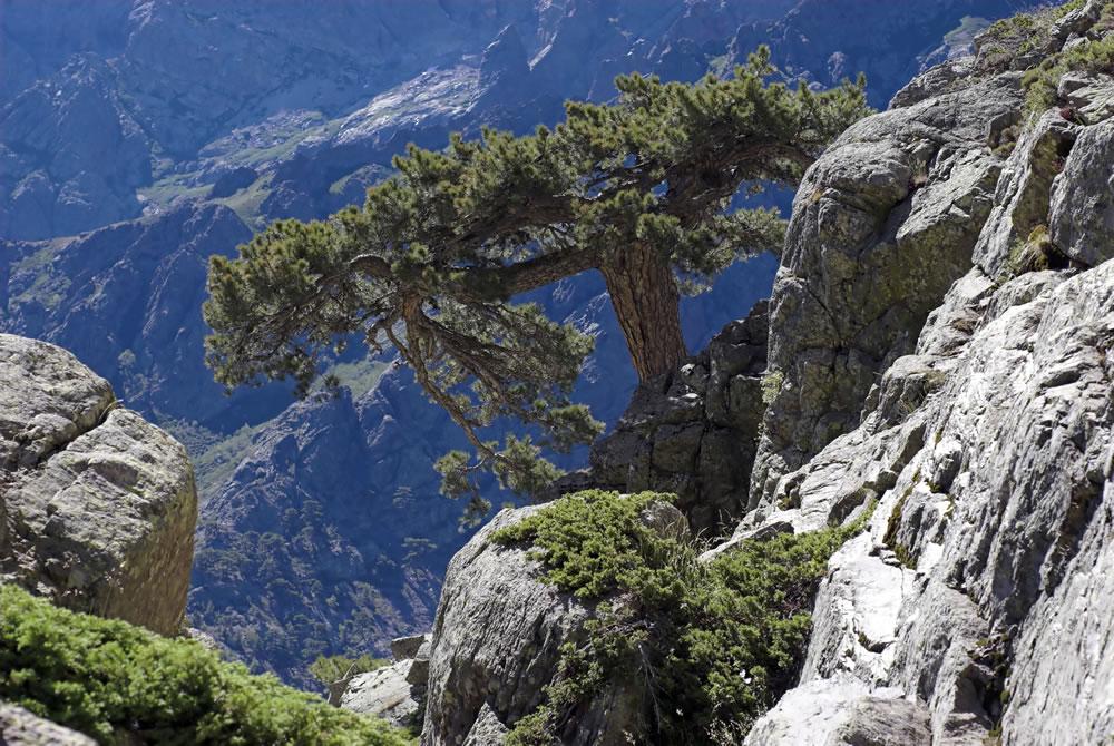 Natur Pur auf Korsika erleben. Beim Wandern auf Korsika erlebt man wunderschöne und beeindruckende Landschaften.