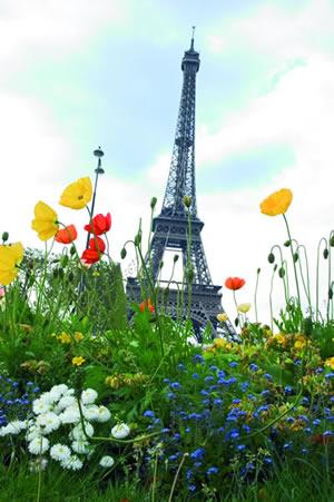 Der Parc du Champ de Mars wurde früher zu militärischen Zwecken genutzt. Man kann vom Champs de Mars direkt auf den Eiffelturm blicken