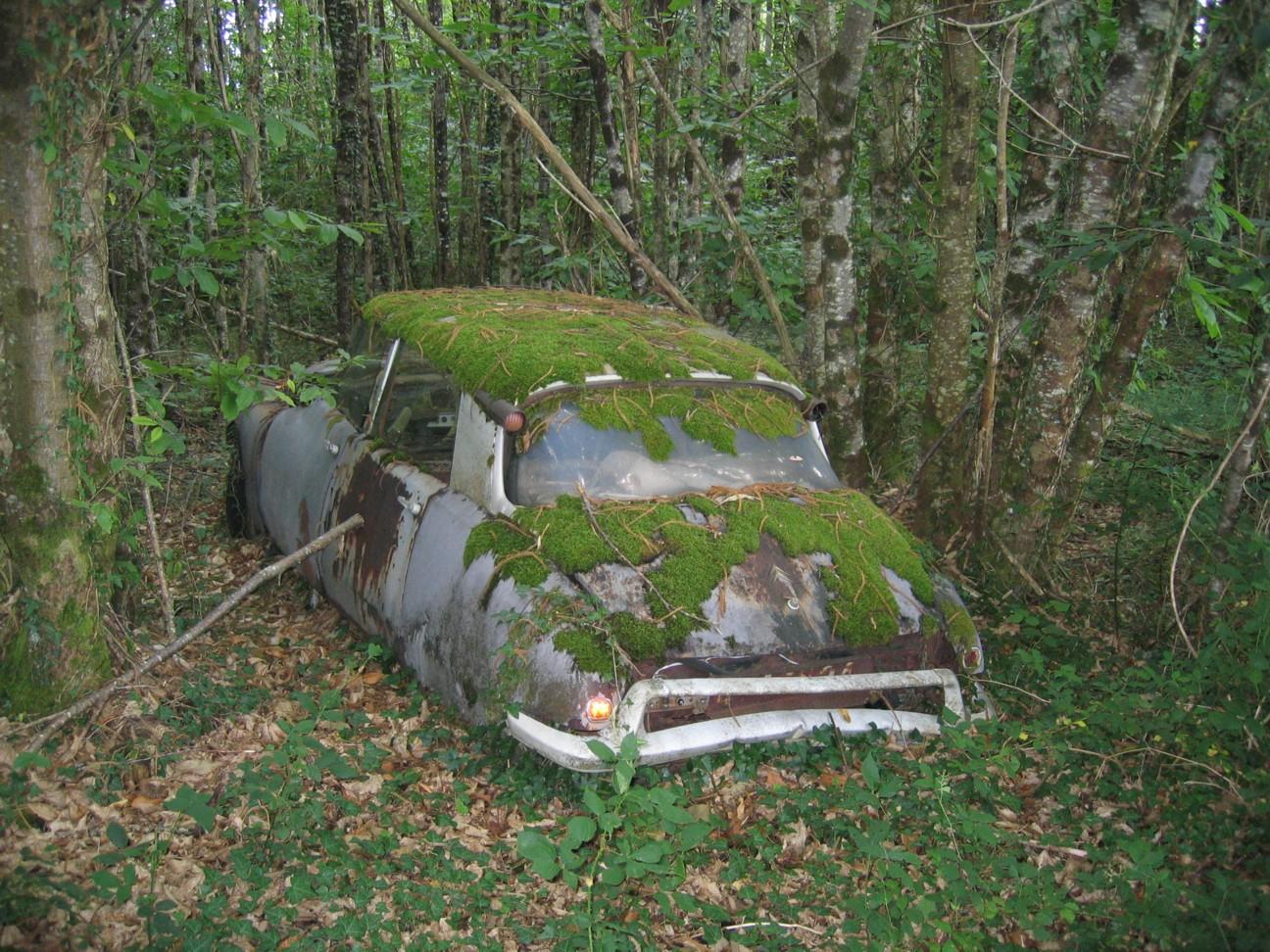 Ein alter Citroen steht schon halb vermodert in einem Wald in Périgord, mit Moos und Rost schon überdeckt.
