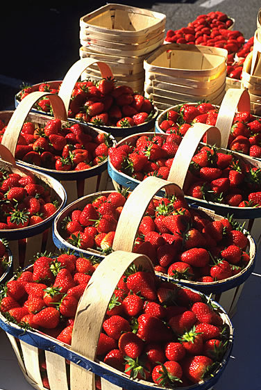 Neben dem Wein genießen auch zahlreiche Obst- und Gemüsesorten aus der Provence einen hervorragenden Ruf unter Gourmets - Die Erdbeeren aus Carpentras.