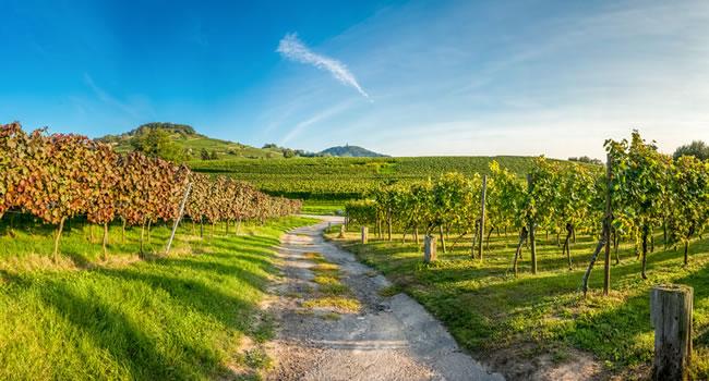 Bordeaux Weintour