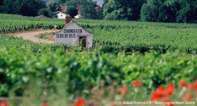 Burgund Weine