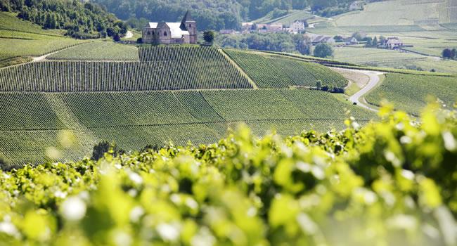 Weinberge in der Region Champagne-Ardenne, Frankreich