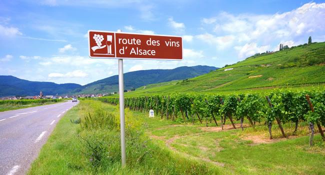 Ein Reisetipp für den Elsass Urlaub, die Weinstraße