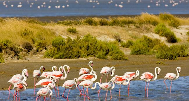 Flamingos im Naturparadies der Camargue