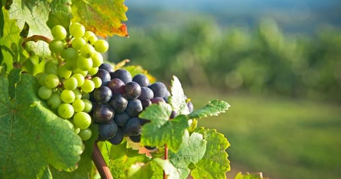 Die Weinregionen in Frankreich