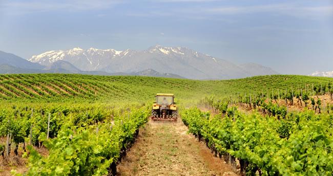 Weinanbau auf Korsika. Die AOC Appellationen.