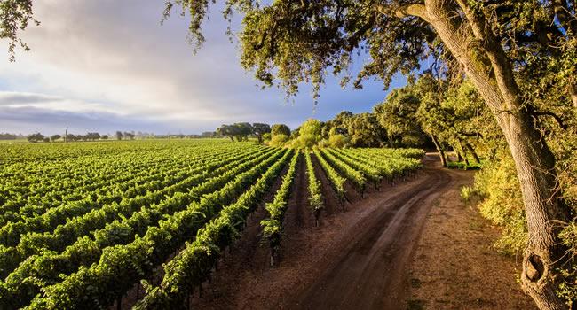 Nachhaltiger Weinanbau in Frankreich